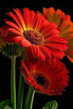 Pretty Flower pinlamiaa gad on romantic flowers | pinterest | flowers
