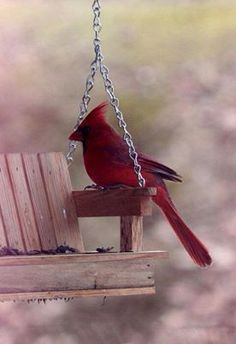 Cute bird feeder -- it's a little birdie porch swing with food in the seat of the swing
