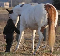 Ranch! Winchester Shotgun, Horses For Sale, Palomino, Beautiful Horses, Funny Pictures, Paint Horses, Ranch, Painting, Animals