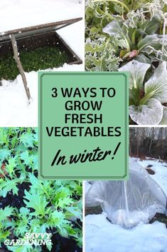 Ways to Grow Fresh Vegetables in Winter Yes you can grow fresh vegetables in winter! Learn how with Savvy Gardening.Yes you can grow fresh vegetables in winter! Learn how with Savvy Gardening. Cold Climate Gardening, Organic Gardening, Gardening Tips, Vegetable Gardening, Indoor Gardening, Cannabis, Growing Winter Vegetables, Fruit Garden, Garden Planters