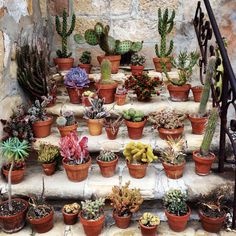 I LOVE CACTI! <3 Need to start building my mini collection.
