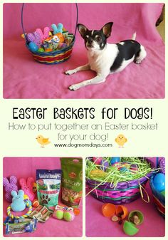 DIY doggy Easter basket. How to put together the perfect Easter basket for your dog! #doggyeasterbasket #easterbasketsfordogs