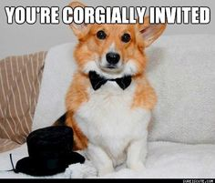 You're Corgially Invited