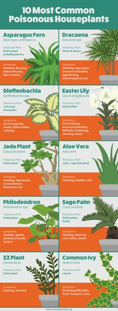 We bet there are some surprises here! 10 most common POISONOUS indoor houseplants. Plantique is a full service plant care company. We design, install and maintain your plants so you don't have to! Poisonous House Plants, Cat Plants, Garden Plants, Indoor Plants, Cat Safe House Plants, Houseplants Safe For Cats, Plants Toxic To Cats, Safe Plants For Cats, Harmful Plants