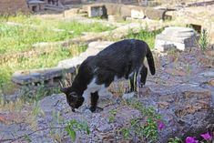Torre Argentina Roman Cat Sanctuary combines history and cats! The cats live among the ancient Roman temples where Julius Caesar was assassinated.