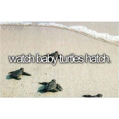 Awe :) #turtle #bucketlist