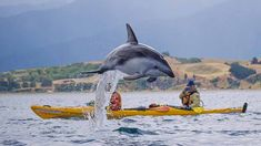Kaikoura - Half Day Fur Seal Kayak Tour - Kaikoura Kayaks - Epic deals and last minute discounts