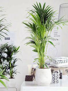 bittergurka plantenhanger ikeacatalogus nieuw 2017 ikea ikeanl planten tuinieren. Black Bedroom Furniture Sets. Home Design Ideas