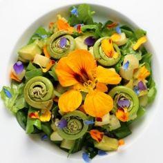 fiddlehead fern frond, edible flower, tatsoi & arugula salad with avocado, yukon gold potato, dijon dressing