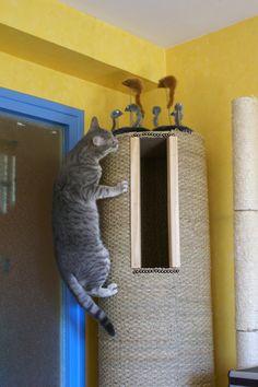 Bonjour, Aujourd'hui, je vous présente l'arbre à chat que j'ai réalisé. Tout d'abord, la liste des matériaux utilisés : - 8 tasseaux de 2 m par 13*27mm - 1 baguette d'angle - des planches d'agglo ( des chutes vendues à 1 € pièce !!!) - du jonc de mer...