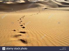 empreintes cheval désert - Recherche Google Recherche Google, Ear, Horse