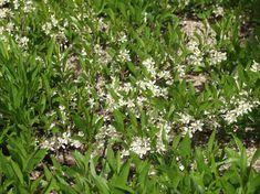 Olympus Digital Camera, Prunus, Jack Frost, Herbs, Butterfly, Garden, Garten, Lawn And Garden, Herb