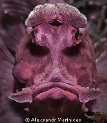 Rhino fish--Aleksandr Marinicev (of Latvia) .... Whoaaaa! That would freak me out if I came across this guy! Lol!
