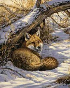 "rosemary millette art | Rosemary Millette Limited Edition Print: ""Restful Moment-Red Fox ..."