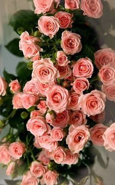 Bunch of roses. Love Rose, My Flower, Pretty Flowers, Flower Power, Tea Roses, Pink Roses, Pink Flowers, Beautiful Roses, Beautiful Gardens