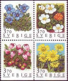 [Mountain Flowers, type ]