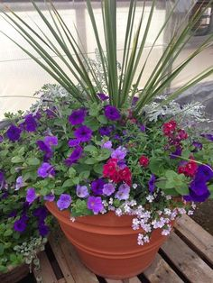 Container Garden with Dusty Miller, Petunia, Snapdragon and Bacopa...
