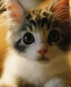 Baby Cats and Kittens meowing playing video Compilation baby Cats Kittens doing funny things    More cute kittens HERE http://www.youtube.com/user/TheFederic777?sub_confirmation=1  #kittens #cats #CuteKittens