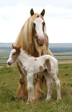 and baby animals Animals of this world Tiere dieser Welt Baby Horses, Draft Horses, Wild Horses, All The Pretty Horses, Beautiful Horses, Animals Beautiful, Farm Animals, Animals And Pets, Cute Animals