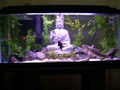 The Zen Aquarium