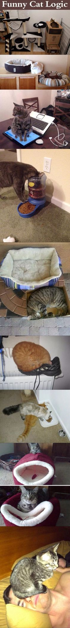 Funny Cat Logic cute animals cat cats adorable animal kittens pets kitten funny pictures funny animals funny cats