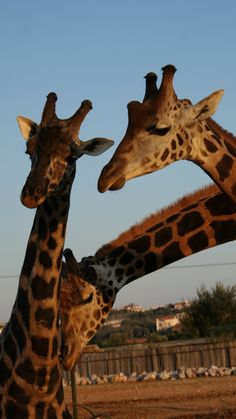 Athens zoological park