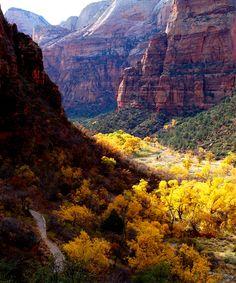 ~ Zion's Canyon ~ Utah....