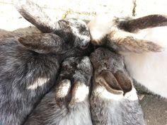 Hoopje konijnen