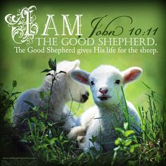 I am the Good Shepherd. The Good Shepherd gives His life for the sheep. John 10:11