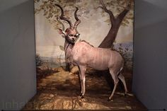 Taxidermy and Contemporary Art Collide in Nevada Museum of Art...