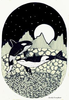 De oceaan, The ocean. Illustratie gemaakt door Grietje Drooglever. Illustration, Killer whale, Orca, vissen, lijntekening, inkt, drawing