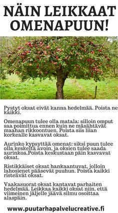 Nyt on aika leikata hedelmäpuut. Näillä ohjeilla saat maukkaampia ja suurempia hedelmiä! www.puutarhapalvelucreative.fi Garden Inspiration, Harvest, Sweet Home, Yard, Outdoors, Gardening, Vegetable Gardening, Patio, House Beautiful
