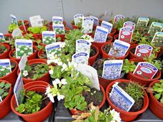 Alpine plants the growers selection from £5.99