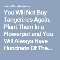 You Will Not Buy Tangerines Again. Plant Them In a Flowerpot and You Will Always Have Hundreds Of Them! - Healthy Solution Team