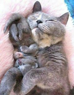 Mother and kitten