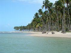Praia dos Carneiros - Tamandare - Pernambuco - Brazil