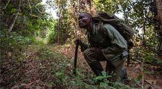 Sierra Leone's ex-civil war fighters battle poachers - Al Jazeera English