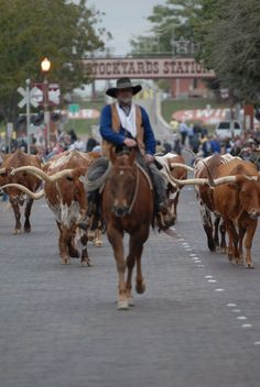 Stockyards Fort Worth, by Jelle Beetstra