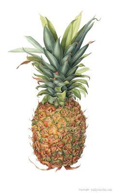 Pineapple SALLY JACOBS