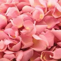 Damask Rose Hydrosol cools swollen and achy feet, balances the chakras and can even assist a mum during labour.