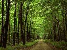 Allegheny National Forrest, Pennsylvania