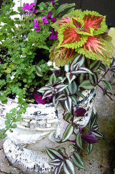Potting garden- idea for kids