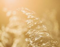 The low winter sun gives it's alms to otherwise trivial stuff in nature. Autumn Lights, Winter Sun