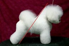 -Repinned-Bichon groom... nice, but I will never see one with this quality of hair in my groom shop! Lol