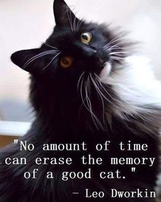 Why Losing A Cat Feels Just Like Losing A Loved One | iHeartCats.com - All Cats Matter ™ #cattruths