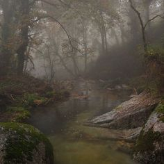 Dark Paradise, Nature Aesthetic, Dark Forest, Foggy Forest, Forest Fairy, Slytherin, Faeries, Pretty Pictures, Aesthetic Pictures