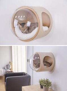 Inspired Cat Beds Are A Thing Now MYZOO have created the Spaceship Series, a line of fun and modern cat beds, plus one can be wall-mounted.MYZOO have created the Spaceship Series, a line of fun and modern cat beds, plus one can be wall-mounted.