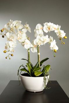 100 pcs/bag orchid seeds, bonsai Butterfly phalaenopsis orchid flower seeds, balcony plant for home garden indoor pot Orchid Flower Arrangements, Orchid Centerpieces, Orchids Garden, Home Garden Plants, Orchid Pot, Orchid Plants, Flowers Perennials, Planting Flowers, Bonsai Flowers