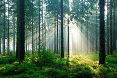fortrollande_skog_large.jpg 1500 × 1000 pixlar