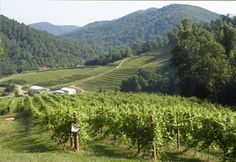 Virginia: Wine Country Tours